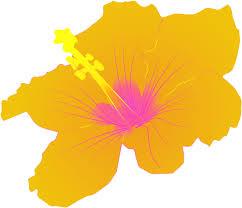 hibisco amarelo 1